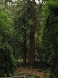 Muir Woods NM