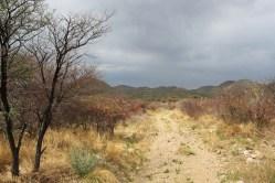 Andreas Dam Walk