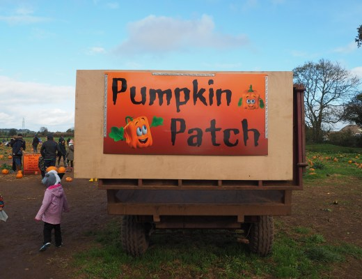 Visiting a pumpkin patch in Somerset