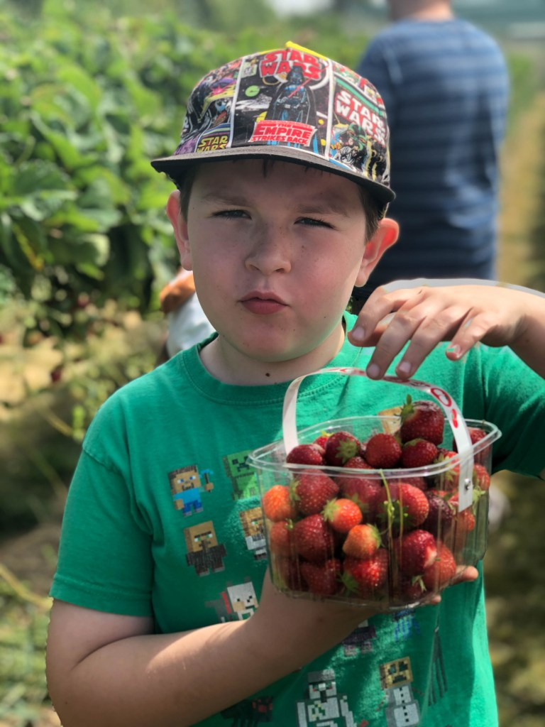 Pick Your Own at Copas Farms Iver Heath