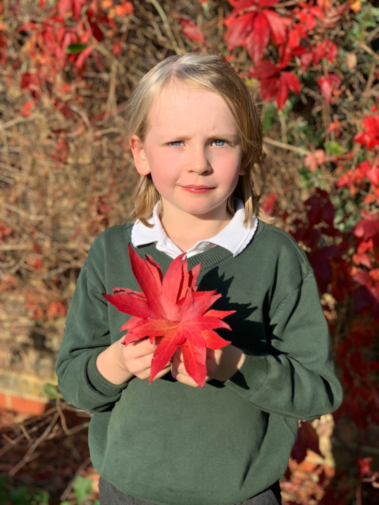 collecting Autumn leaves to craft with