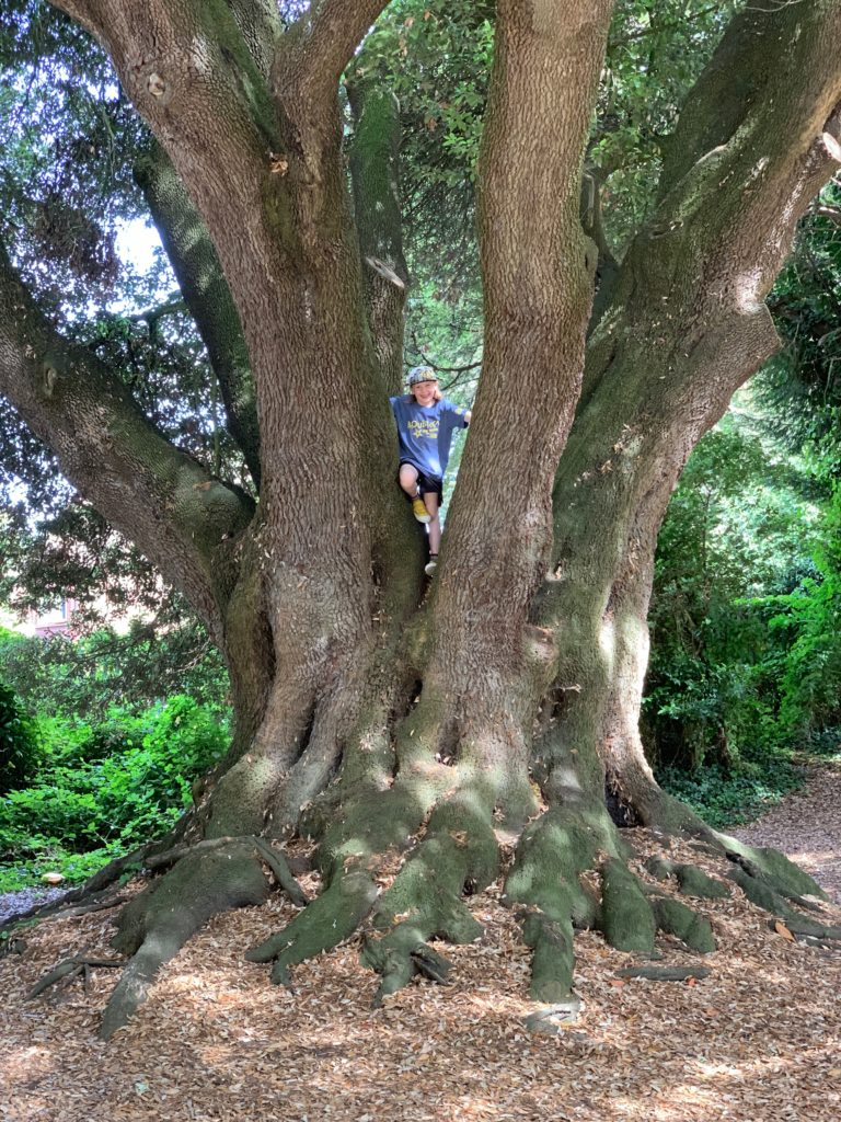 perfect climbing tree for kids