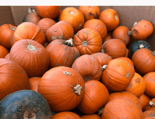 best places to pick pumpkins near London