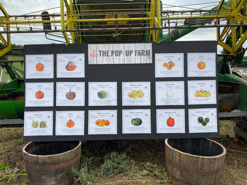 different varieties of pumpkin and squash