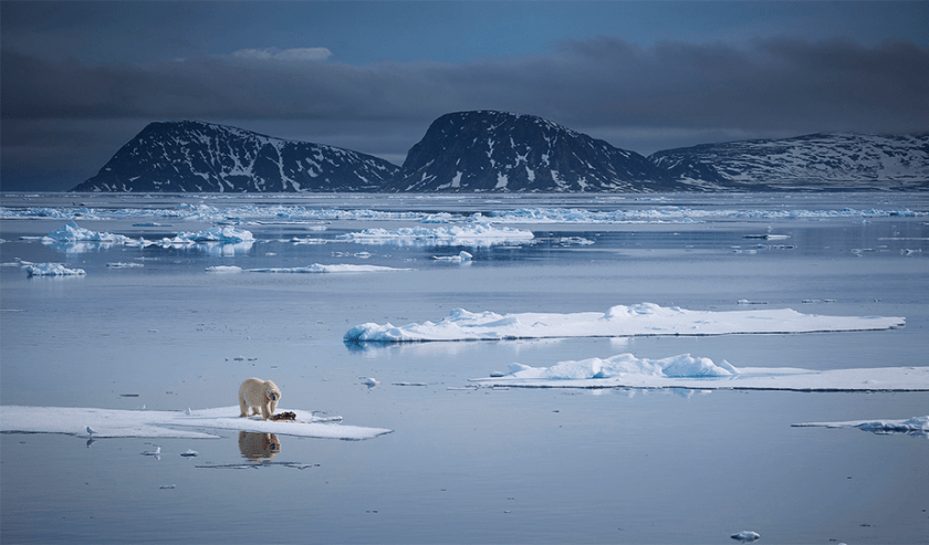 ijsbeer die op een klein stukje oog eet