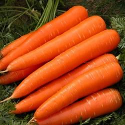 Kuinka kokata porkkanoita mikroaaltouunissa