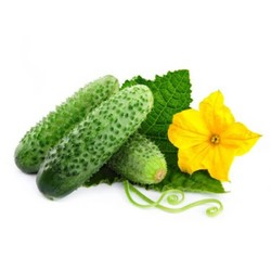 Fresh cucumbers for a long time how to save