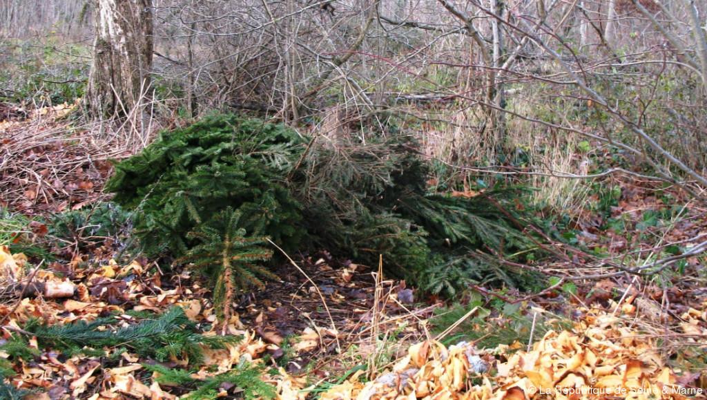 Votre Sapin De Noël Nest Pas Le Bienvenu En Forêt La