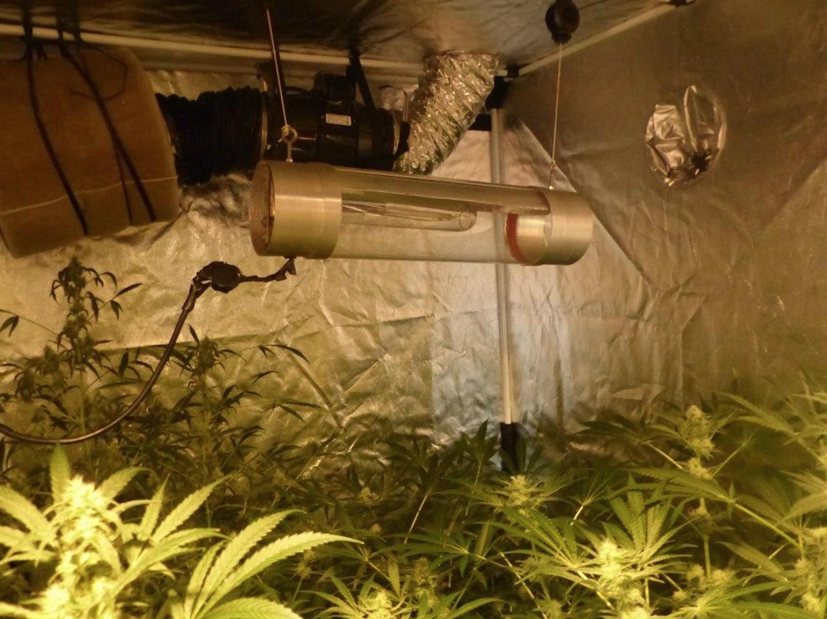 dinard une chambre de culture de cannabis decouverte par la police en centre ville actu fr