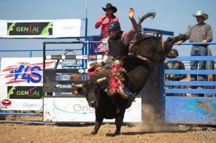 Bull using, final exhibits at 4S Ranch in Glos-la-Ferrière, September 26 and 27, 2020