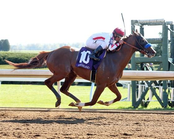 Preakness The Target For Lexington Stakes Winner Collected