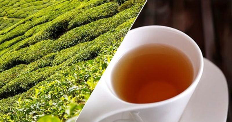 Did you know drinking tea may improve brain health? Read this