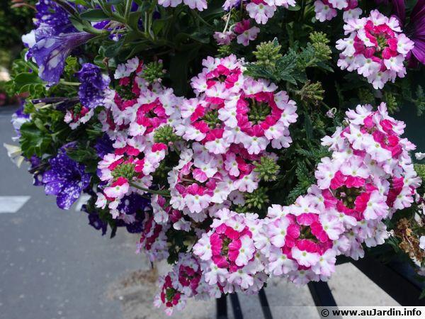 composer une belle jardiniere de printemps