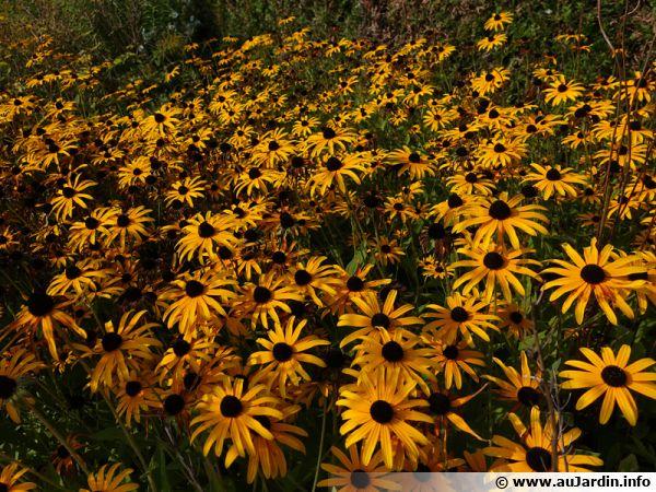 10 plantes pour massifs faciles a cultiver