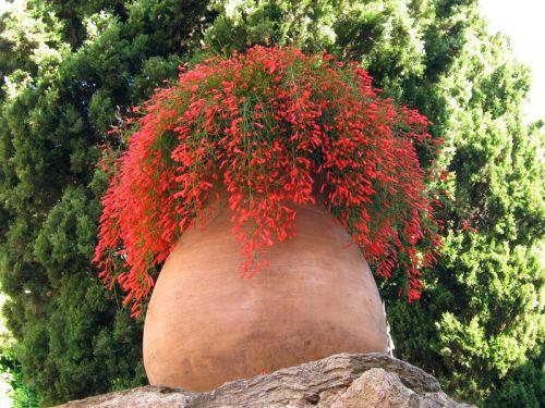 cultiver des plantes en pots