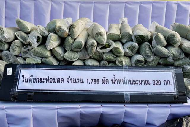 Packets of kratom leaves seized in Narathiwat province. The Justice Ministry plans to remove kratom from the list of illicit narcotic drugs. (Photo: Waedao Harai)