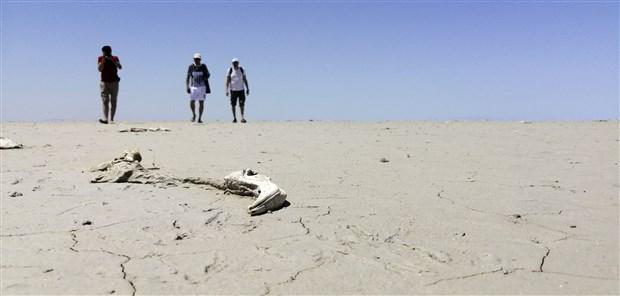 tuz-golu-icin-yeni-uyari-olumlerden-sonra-flamingolar-gole-gelmeyebilir-899771-1.