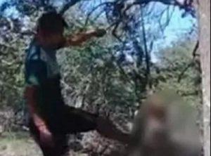 Cane appeso ad albero e ucciso a bastonate in Argentina