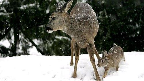unusual-animal-friendship-9-3