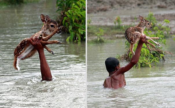 bangladeshi-boy-saves-drowning-baby-deer-5