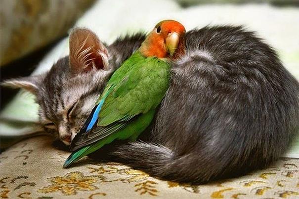 cute-animals-sleeping-pillows-29