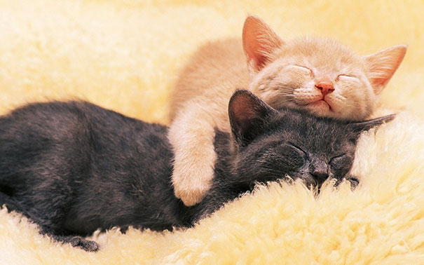 cute-animals-sleeping-pillows-5