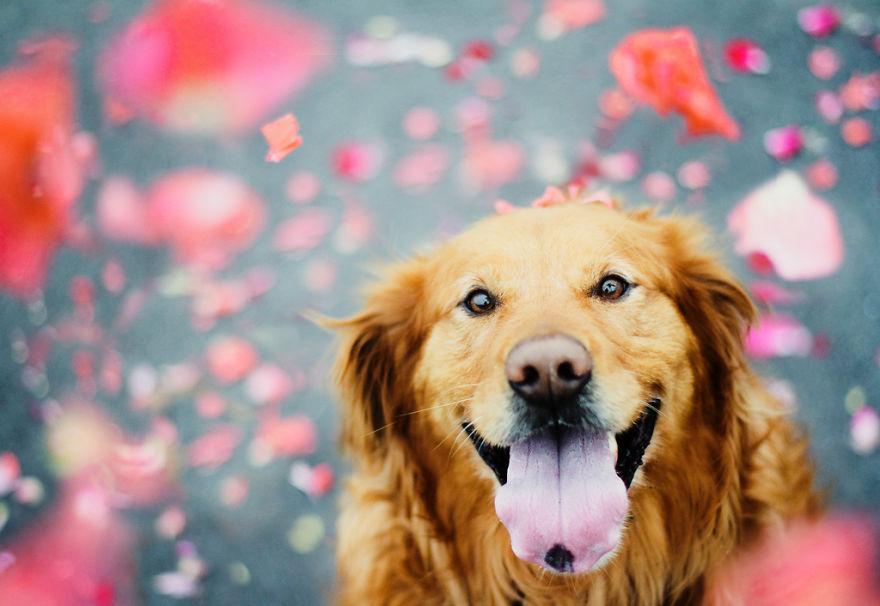 dog-photography-chuppy-golden-retriever-jessica-trinh-21
