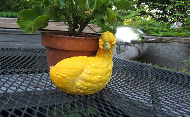 funny-shaped-vegetables-fruits-9