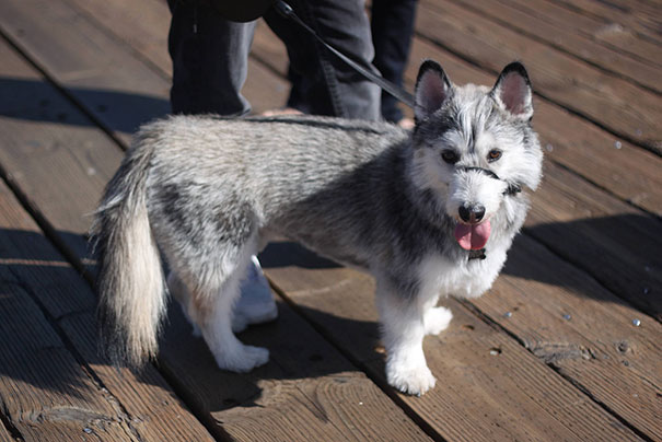 mixed-breed-dogs-20