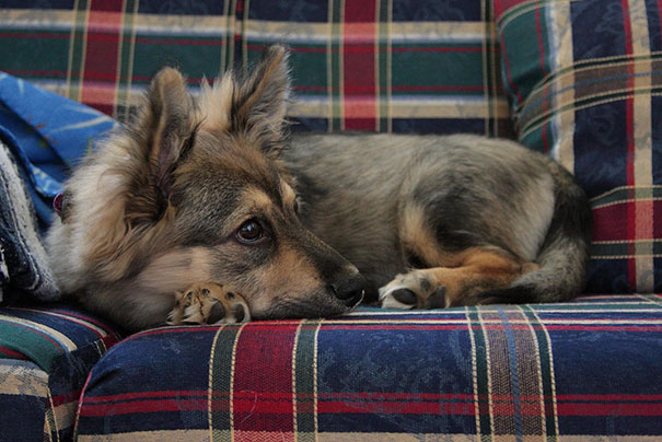 mixed-breed-dogs-6