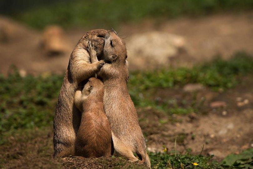 animal parents 10 - Momentos adoráveis dos pais com os filhotes no reino animal