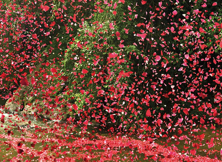 8 Million Flower Petals Rain Down On A Village In Costa Rica   Bored     flower petal explosion sony 4k ultra hd 7