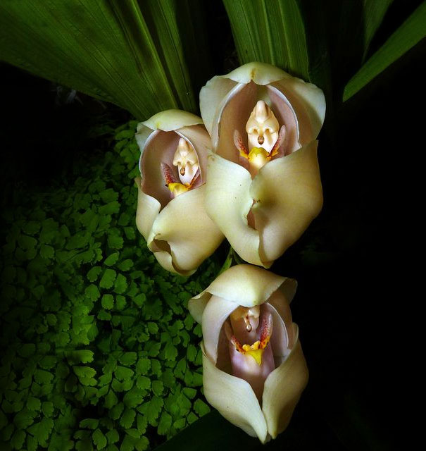 Image result for wonderful flowers image