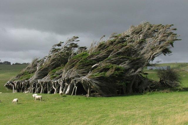 amazing-trees-18