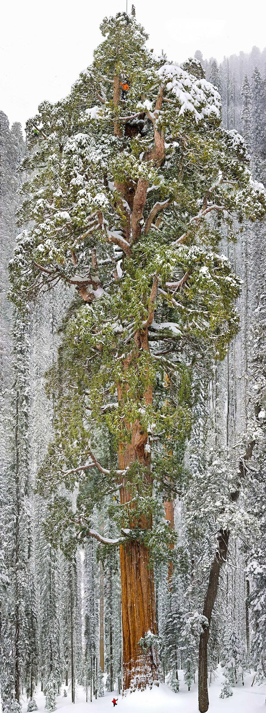 amazing-trees-20