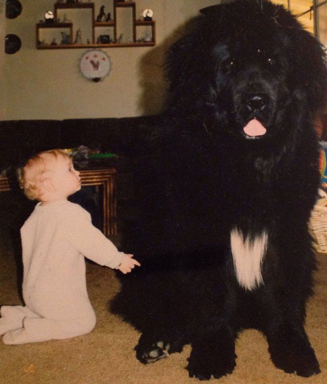 cute-big-dogs-and-babies-4