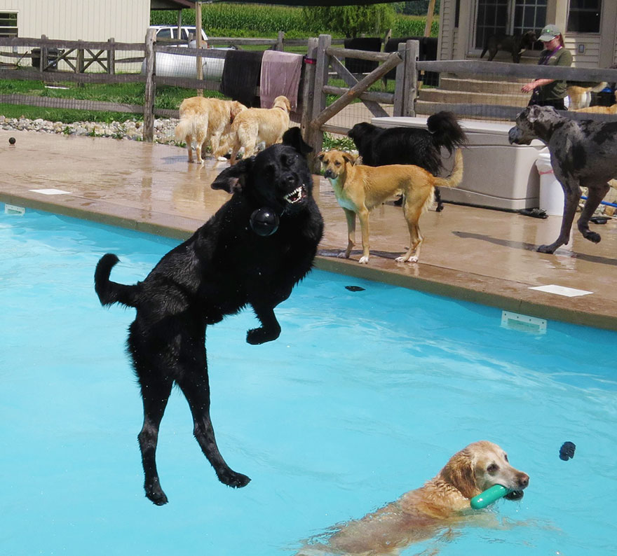 dog-pool-party-lucky-puppy-11