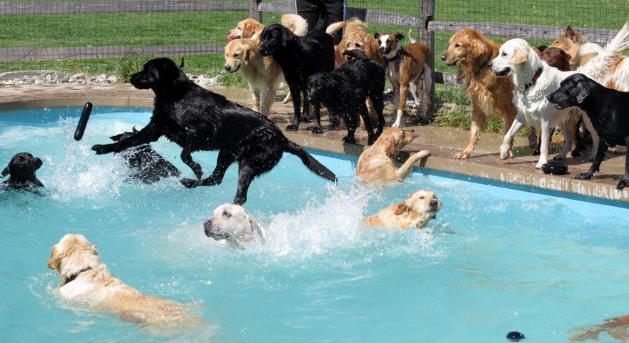 dog-pool-party-lucky-puppy-27