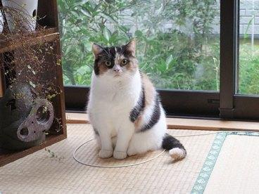 Cat Trap