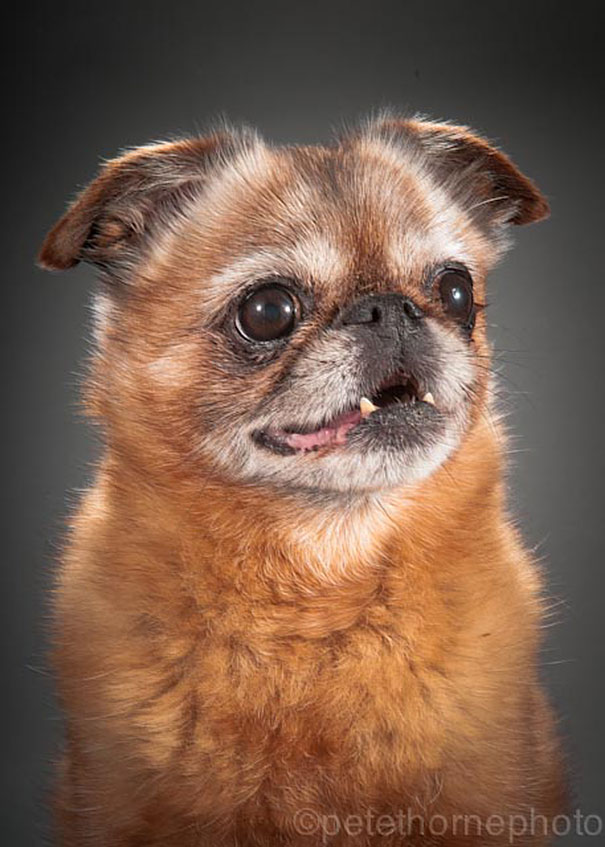 old-dog-portrait-photography-old-faithful-pete-thorne-4
