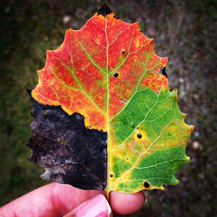 All Seasons In One Leaf
