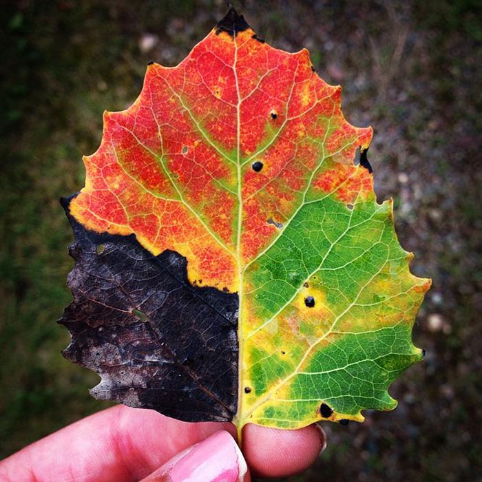Image Result For Color Changing Gl