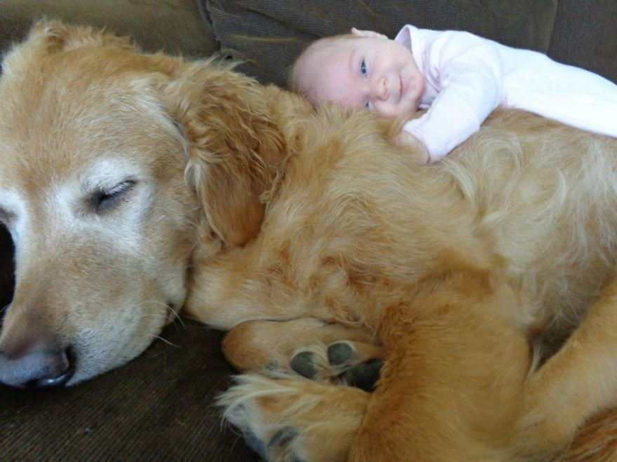 Little Baby, Big Dog