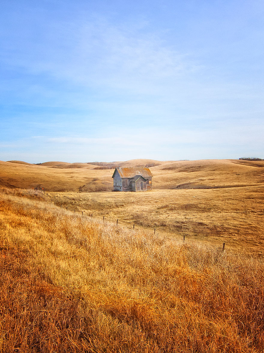 In The Fields Of Gold, Alberta, Canada