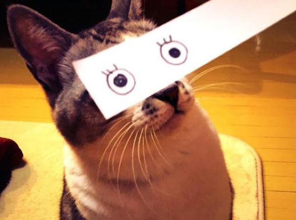 Cartoon Eyes On A Cat