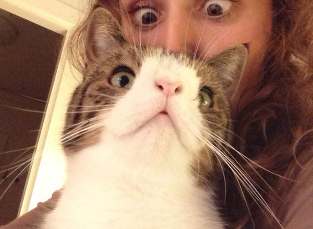 cute-cat-without-nosal-bone-monty-13