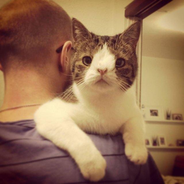 cute-cat-without-nosal-bone-monty-5