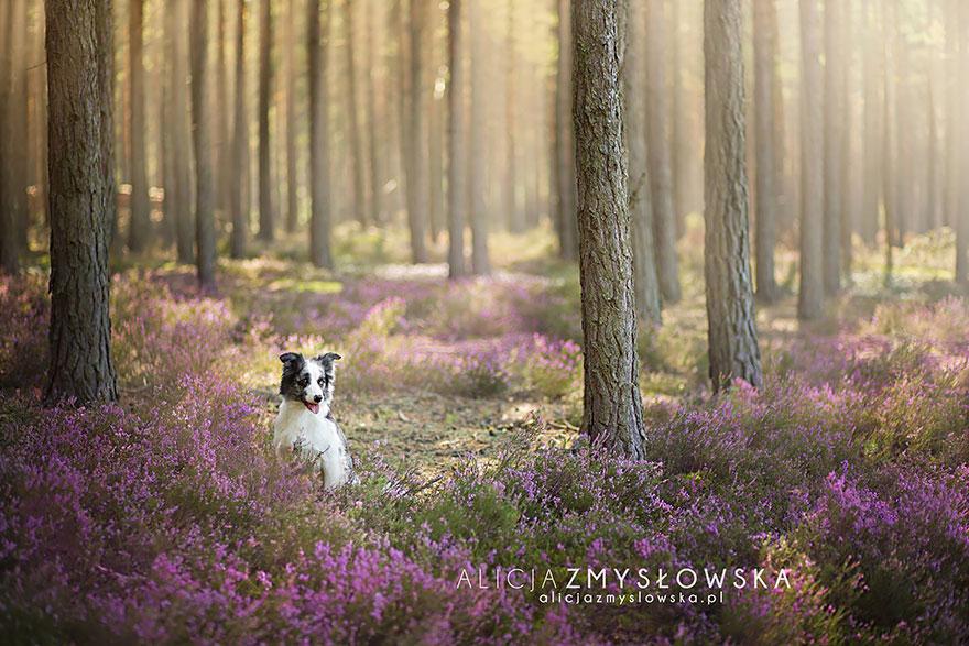 dog-photography-alicja-zmyslowska-25