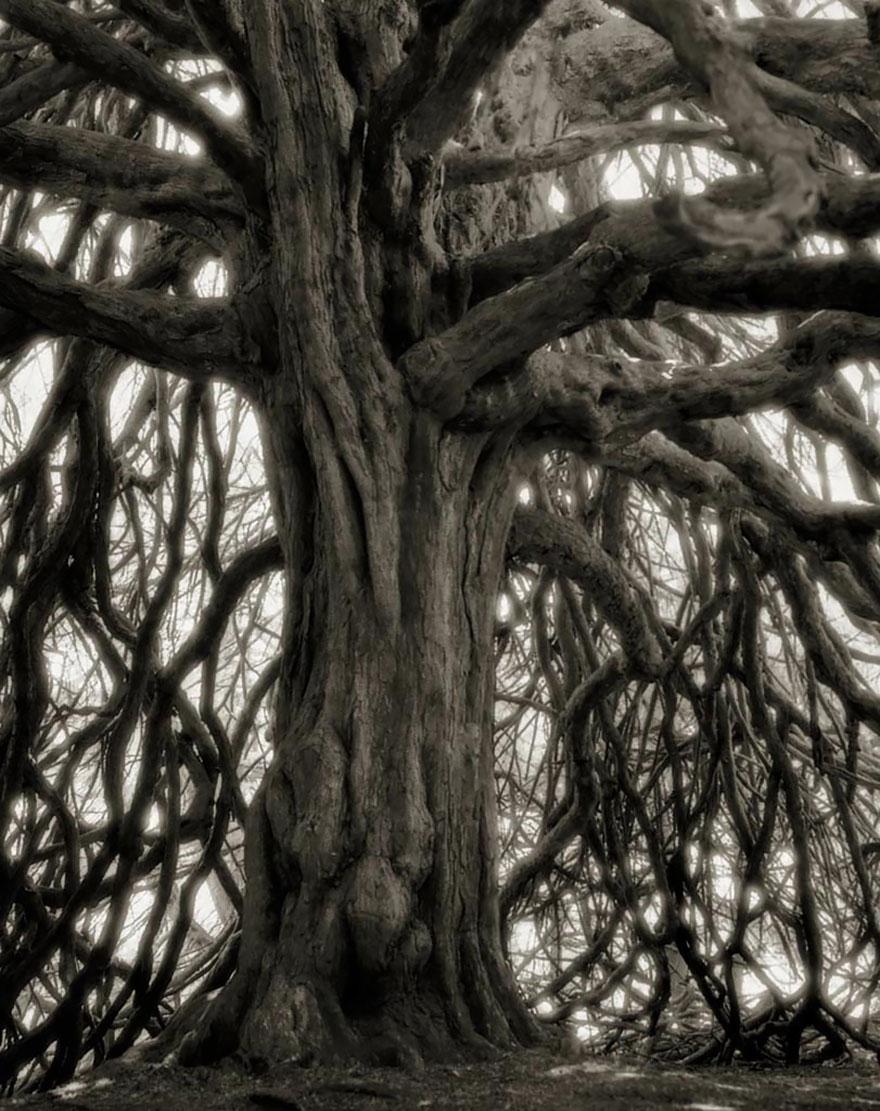 antichi alberi-Bet-moon-18