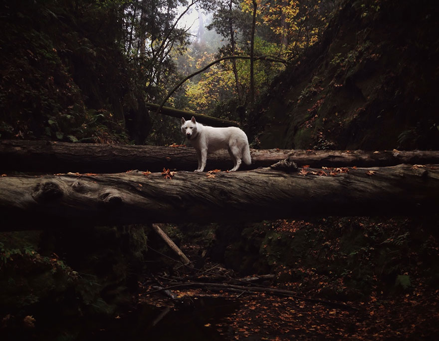 dog-adventures-john-stortz-13